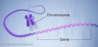 a gene
