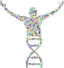 a genome